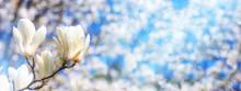 Spring Background, Panorama, B...
