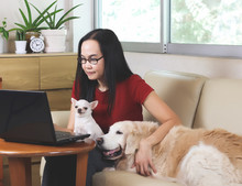 Woman Sitting In Living Room Typing On Computer Laptop  With Her Chihuahua Dog On Her Lap And Golden Retriever Dog Lying On Sofa Beside Her. Working From Home  Concept.