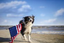 Patriotic Border Collie Dog Ru...