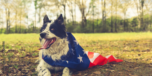Panting border collie dog outside wearing an american flag cape