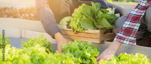 Fotografie, Obraz Beautiful young asian man and woman picking up fresh organic vegetable with basket together in the hydroponic farm, harvest and agriculture for healthy food and business concept, banner website