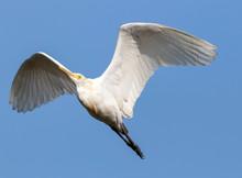 Birds Flying Over Wetland In Sri Lanka