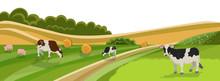 Cow And Pig Graze On Grassland...