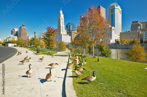 Valokuva Canadian Geese and Scioto River and Columbus Ohio skyline