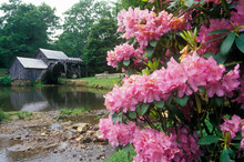 Mabry Mill With Flowers In For...