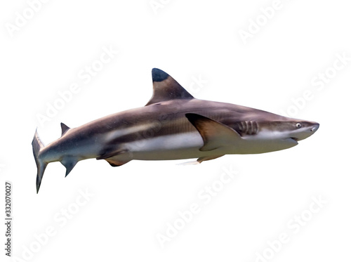 Photo Ferocious shark Separated from the background