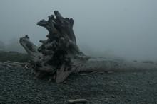 Coast With Fog