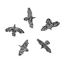 Hand Drawn Flying Wild Birds Drawn By Ink. Decorative Vector Illustration. Sketch Style Black Isolated On White Background