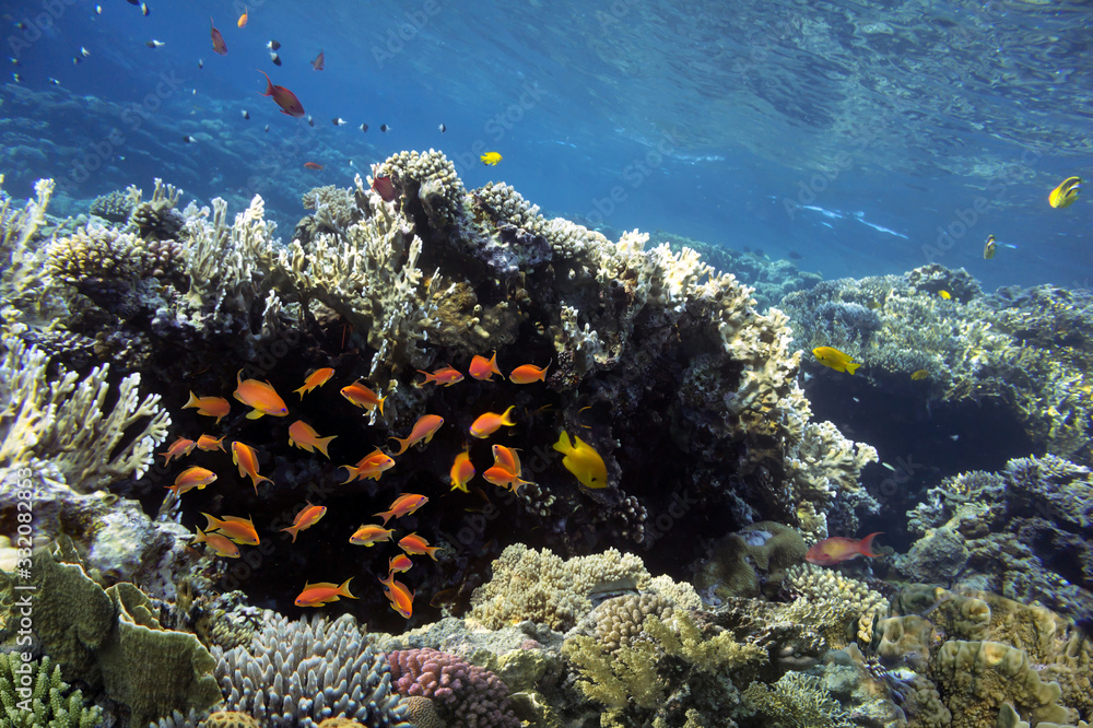 Fototapeta Colorful coral reef with tropical fish