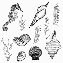 Flora And Fauna Of The Seabed ...