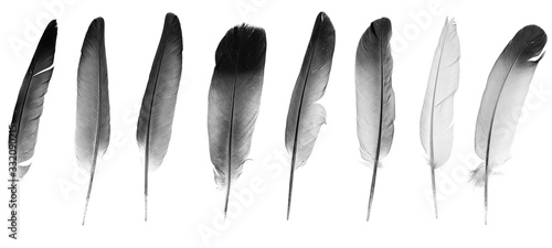 Fototapeta Natural bird feathers isolated on a white background. collage pigeon and goose feathers close-up obraz