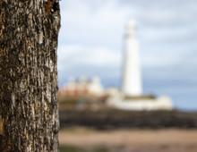 St Mary's Lighthouse Driftwood
