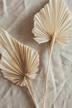 Tan Fan Craft Leaves On Beige ...
