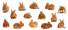 Collage With Adorable Fluffy Easter Bunnies On White Background