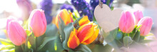 Fresh Tulips For Mothers Day