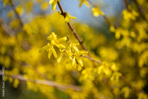 Closeup shot of a branch with yellow flowers