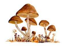 Watercolor Hand Drawn Wild Natural Poisonous Dangerous Mushroom Illustration Composition Of Webcap Fungi With Brown Ochre Caps In Fall Autumn Forest Wood Grass For Nature Lovers For Halloween Design