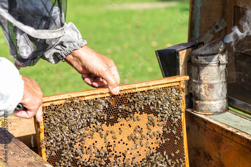 Beekeeper  keeps frame with honeycomb, looks after bees in the garden ,beekeeper Canvas Print