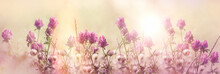 Red Clover, Flowering Red, Wil...