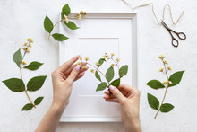 Womans Hands Decorate A Herbarium Of Flowers In A Frame For Pictures. Botanical Illustrations In Home Decor. Flat Lay. White Concrete Background