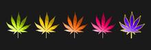 Five Hemp (Canabis) Leaves In ...