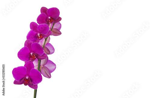 Różowy storczyk kwiat z łodygą na białym tle - 332185603