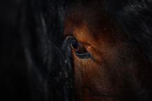 Eye Of A Beautiful Horse On Da...