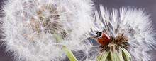Closeup Of Ladybug Sitting On ...
