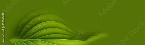 Obraz green leaf background - fototapety do salonu