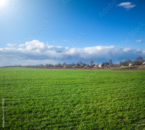 Obraz Agriculture green filed with countryside houses in background  - fototapety do salonu