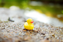 Lonely Yellow Rubber Duck By The River. Rubber Toy Left Behind By Kids After Water Fun Outdoors.
