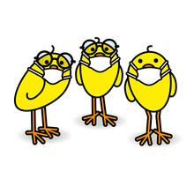 Three Yellow Chicks Wearing Spectacles And Medical Masks