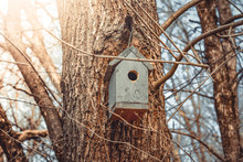 Empty Wooden Birdhouse In A Sp...