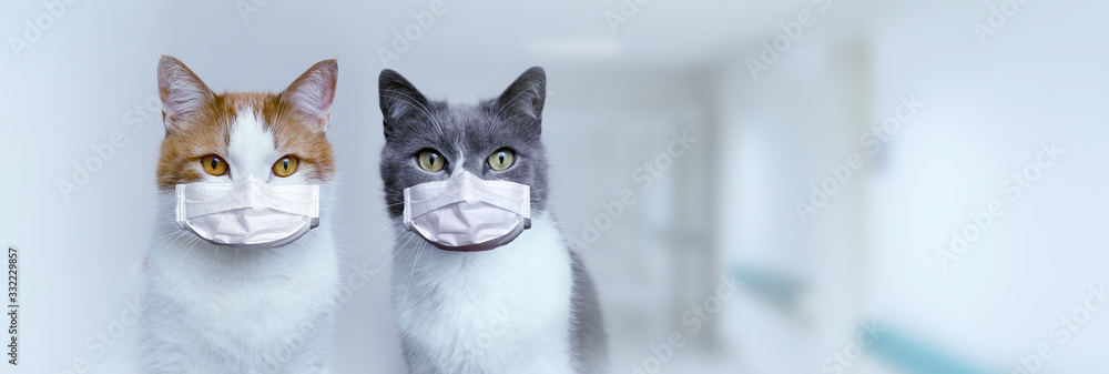 Fototapeta Two cats in medical protective masks. Protection and treatment of the virus. Pandemic 2020.