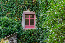 Window With Red Frame On Ivy C...