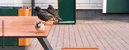 Photo starling sits on a cafe table