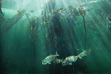 South Africa, Fish, Cape Town,...
