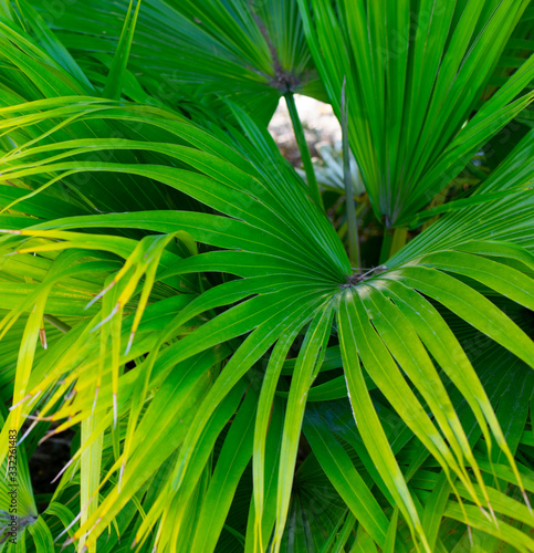 Green Palm Tree Leaves