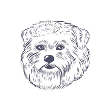 Norfolk Terrier Head Vector Sk...