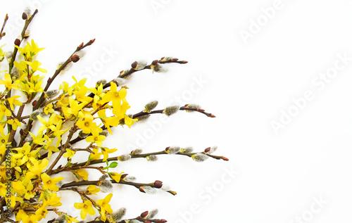 Obraz Wielkanocne bazie i żółte kwiaty forsycji na białym tle - fototapety do salonu