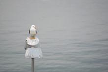 Closeup Of A Seagull Perched O...