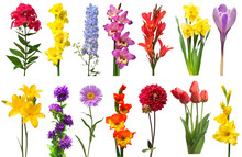 Spring Collection Of Flowers Bell, Phlox, Tulip, Crocus, Daffodil, Gladiolus, Delphinium, Daylily, Canna Isolated On A White Background