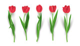 Fototapeta Tulipany - Set of realistic red tulip flower isolated vector illustration