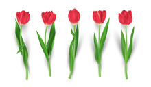 Set Of Realistic Red Tulip Flo...