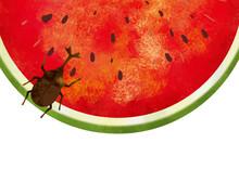 夏:虫 西瓜 スイカ...