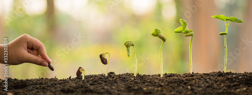 Fototapeta hand holding and caring a green plant over lighting background, planting tree, environment, background.agriculture, horticulture. plant growth evolution from seed to sapling, ecology concept. obraz