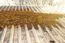 Dirty And Clogged Roof. Leaves And Branches As An Obstacle To The Flow Of Water.
