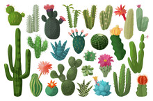 Cactus Isolated Cartoon Set Ic...