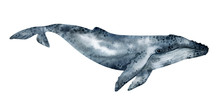 Watercolor Humpback Whale Illu...