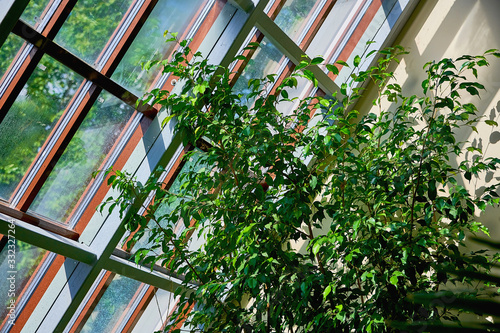 Tropical greenhouse in the house. Sunny interior full of various green plants.Natural indoor ornamental plants. Lush Botanical garden.